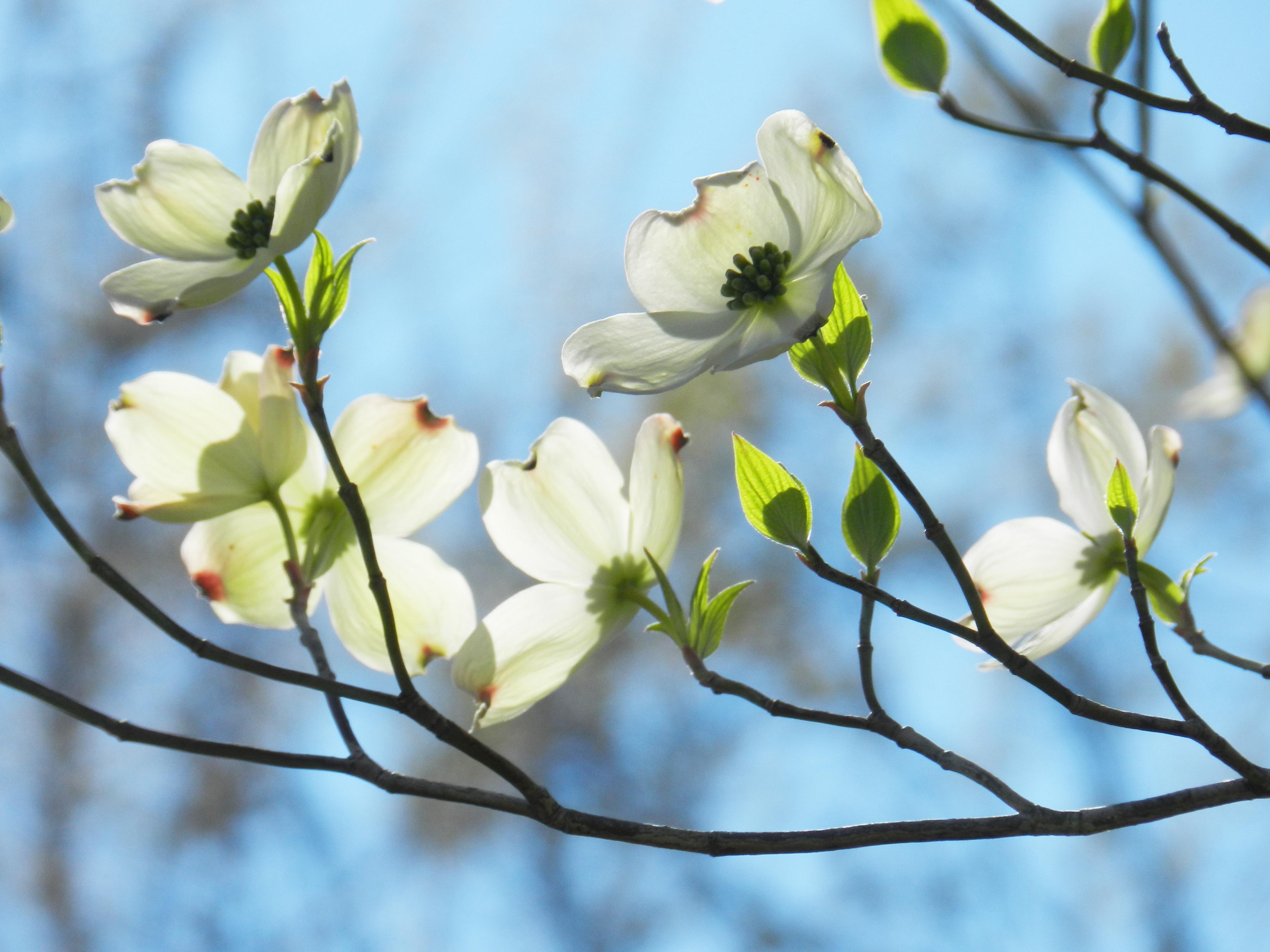 wiosenne porządki